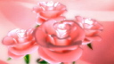 Royalty Free Video of Rotating Roses