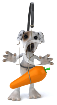 Royalty Free Clipart Image of a Jack Russell With a Carrot in Front of It