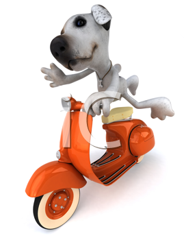 Royalty Free Clipart Image of a Jack Russell on a Scooter