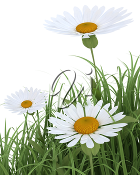 3D render of Spring Flowers in Grass isolated on white