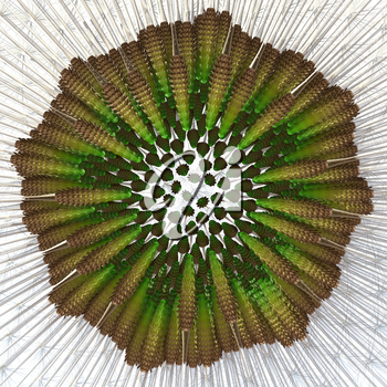 3d render of dandelion seeds arranged, detached from head for closeup examination. Example of the golden ratio and Fibonacci sequence in action. 400 seeds approximately.
