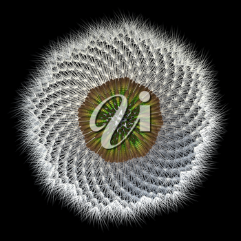 Did you know dandelions are related to sunflowers? Here is an under view of the seeds, in arrangement, separated from the head of the plant. 3d experiment with Fibonacci sequence/golden ratio.