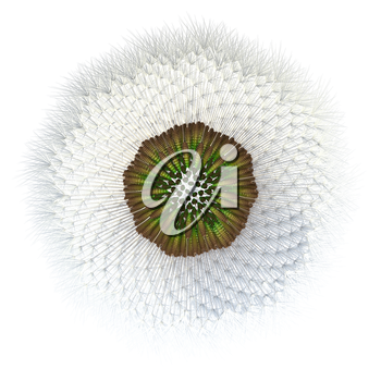 3d generated dandelion seeds, with hair particles acting as the wind catchers distinctive of dandelion seeds. Experiment with golden ratio and point generation applied to a dandelion.