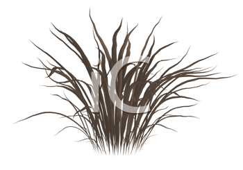 Royalty Free Clipart Image of a Clump of Dead Grass