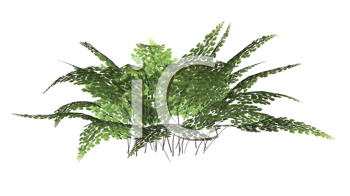 Royalty Free Clipart Image of a Fern