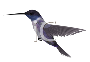 Royalty Free Clipart Image of a Hummingbird