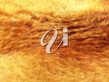 Fox fur: Yellow and brown pattern or background. Useful for fashion