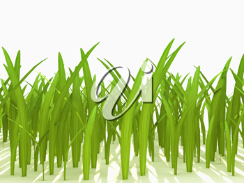 Royalty Free Clipart Image of Green Grass