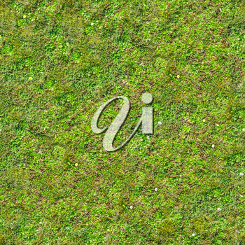 Green Grass with Flowers on the Ground. Seamless Tileable Texture.