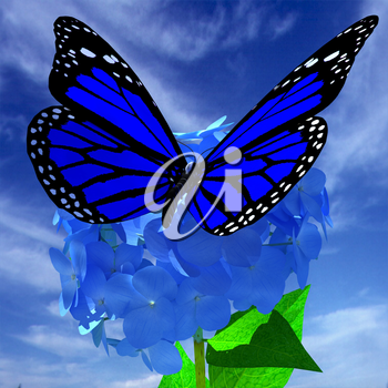 Beautiful Ajisai Flower and butterfly against the sky