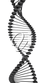 DNA structure model on a white background