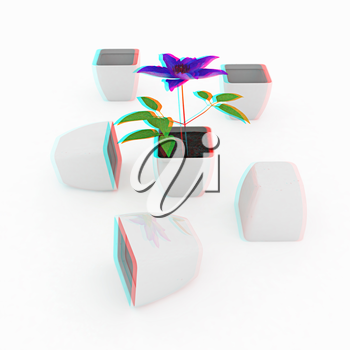 Clematis a beautiful flower in the white pot. 3D illustration. Anaglyph. View with red/cyan glasses to see in 3D.