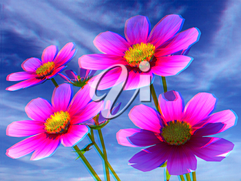 Beautiful Cosmos Flower against the sky. Anaglyph. View with red/cyan glasses to see in 3D. 3D illustration
