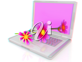 cosmos flower on laptop on a white background. 3D illustration. Anaglyph. View with red/cyan glasses to see in 3D.