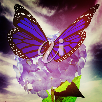 Beautiful Ajisai Flower and butterfly against the sky. 3D illustration. Vintage style.