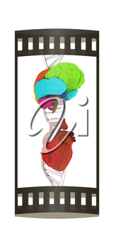 DNA, brain and heart. 3d illustration. The film strip