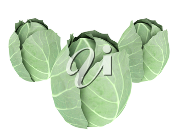 green cabbage isolated on white background. 3d illustration