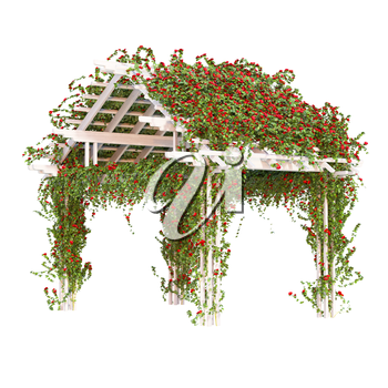 Red roses grown on a wooden pergola. Curly ivy, roses and green leaves