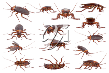 Cockroach bug brown and orange small pest set. 3D rendering