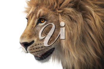 Lion head wild male mammal, close view. 3D rendering