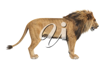 Lion african male panthera, side view. 3D rendering