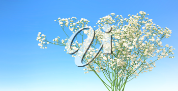 Small white flowers in blue sky background. 3D illustration