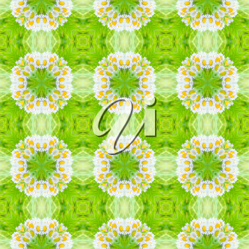 Abstract circle floral seamless background from daisy flower.